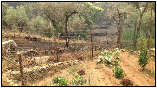 adriana's-horta
