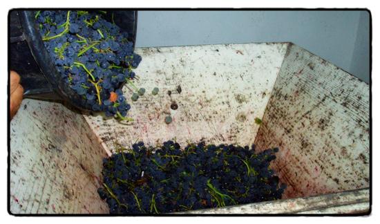 grapes_0
