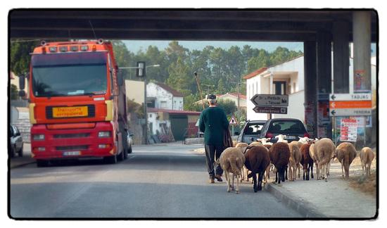 shepherd-and-truck