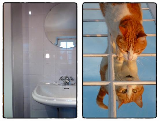 sink-cat