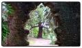 monserrate-gardens
