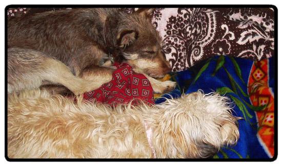 wookie & muppet