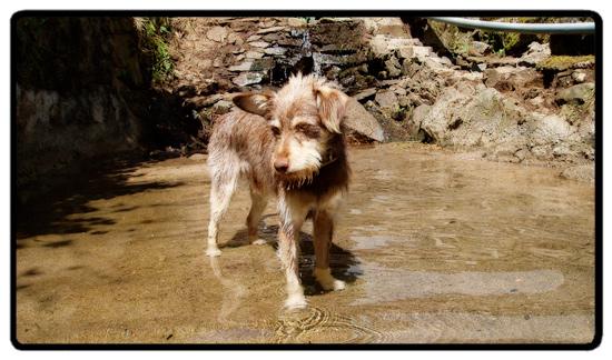 wookie swimming
